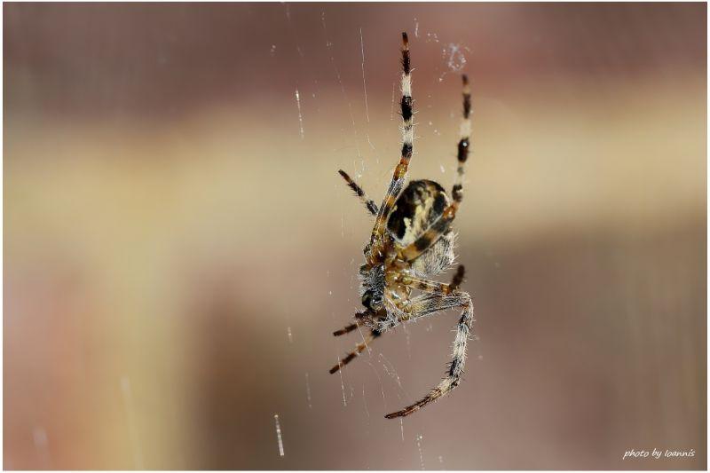 Spider-