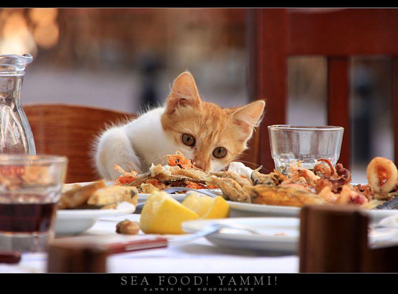 Sea Food! Yummi!