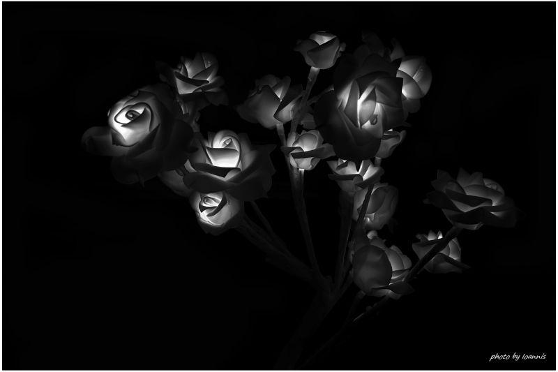 B+W Roses