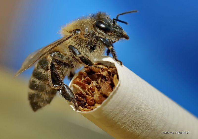 Το κάπνισμα βλάπτει σοβαρά την υγεία