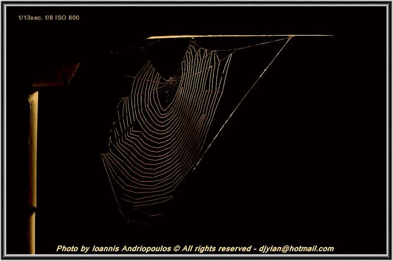 Web in the Dark